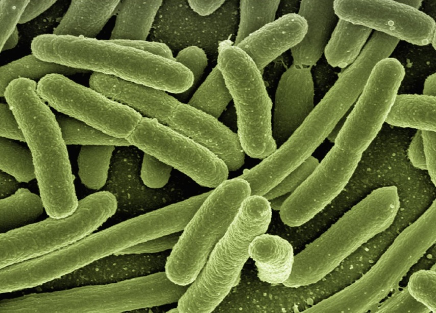 microscopic view of bacteria